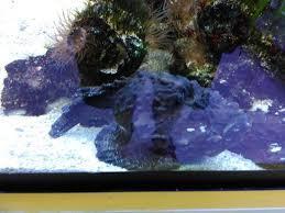 Fish Tank Reception Desk Display Tank At Reception Desk Picture Of Pusat Ikan Hiasan