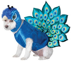 small dog witch costume animal planet peacock dog costume costume craze