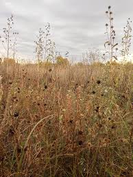 the prairie ecologist essays photos and discussion about