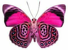 the freedom we take for granted butterfly and moth