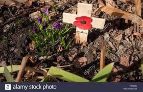 little poppy remembrance cross 2 lobed british petals purple