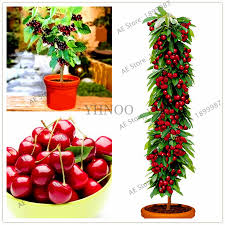 get cheap small trees sale aliexpress alibaba
