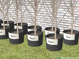 Apple Tree In My Backyard How To Plant Fruit Trees With Pictures Wikihow