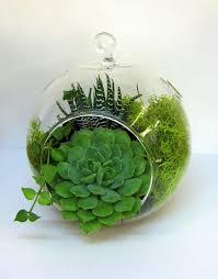 dia 10cm 12cm 15cm hanging glass globe terrarium a bubble garden