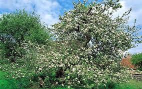mild winter will a bad apple harvest telegraph