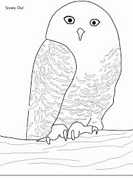 snowy owl coloring pages snowy owl coloring page handipoints to