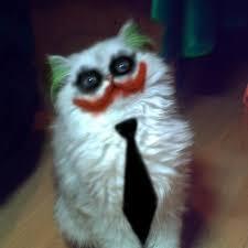 Cat Costumes Halloween 100 Genius Pet Costumes Halloween Pet Costumes Costumes Cat