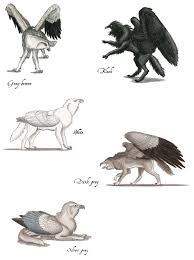 wolf griffin color phases by larua gryphon pinterest