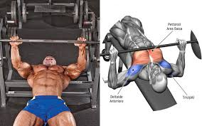 How To Strengthen Your Bench Press Need A Stronger Bench Press Start Training Your Rear Delts