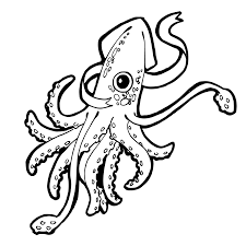 squid coloring pages stunning squid coloring pages with squid