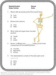 skeletal system worksheet answers free worksheets library