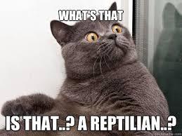 Reptilian Meme - what s that is that a reptilian conspiracy cat quickmeme