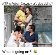 What Is S Meme - wtf is robert downey jr s dog doing what is going on meme