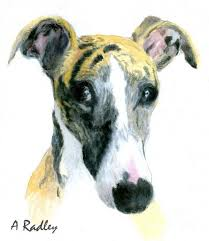 876 best whippet sighthound portraits images on pinterest