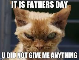 Mad Cat Memes - mad cat memes imgflip