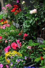 Flower Shops Inverness - friday flowers habitually chic flower delivery flowers and peony
