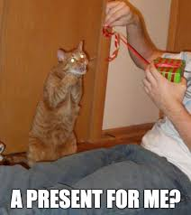 Excited Meme - overly excited cat weknowmemes