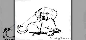 how to draw a cartoon golden retriever puppy dog drawing