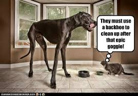 Great Dane Meme - what do you mean there is something wrong with my horse by rajaei