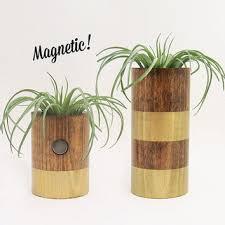 shop plant magnet on wanelo
