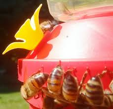 animal behaviour do bees at the hummingbird feeders keep the