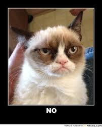 Grumpy Cat Snow Meme - no cat meme 28 images is yoga pilates the same thing grumpy cat