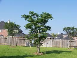 trees 2007