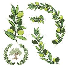 vector wreath with olive branch and olive tree stock vector