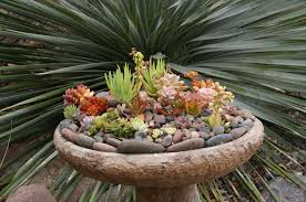 succulent container gardens u0027 some design guidance for low water