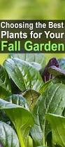 Fall Plants For Vegetable Garden by Choosing The Best Plants For Your Fall Garden Homestead Survival