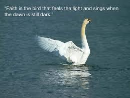 birds quotes 3 728 jpg cb 1275988565 quotes bird