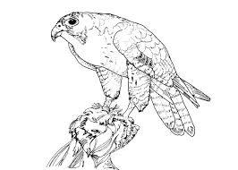 secretary bird coloring free secretary bird coloring 16593