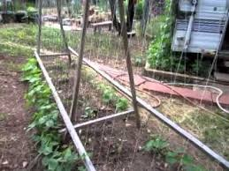 How To Make Trellis For Peas How To Build A Pole Bean Frame Youtube
