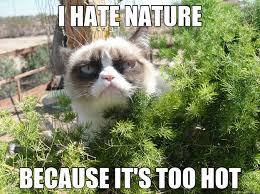 Too Hot Meme - i hate nature because it s too hot grumpy cat bush quickmeme