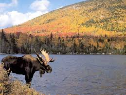 what does wood symbolize moose symbolism a message spirit animal totems