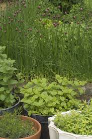 growing vegetables and herbs in containers harvest to table
