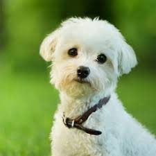 dog wallpapers dog wallpapers pictures cute dogs on the app store