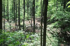 western ny timber sales future forest consulting