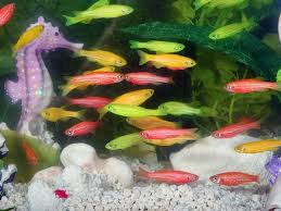 types of aquarium fish for luck boldsky