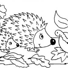 hedgehog coloring pages drawing a hedgehog colouring pages bulk color