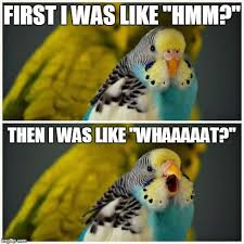 Parrot Meme - ideal parrot meme kayak wallpaper