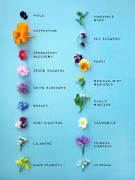 flowers edible food erin jang for lucky edible flowers chart