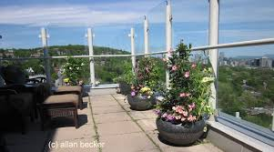 penthouse gardening with mandevilla and skyline journal garden
