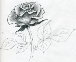 flower drawing in pencil best 25 pencil sketches of flowers ideas