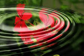 Image Zen Gratuite by Musique Zen Gratuite Archives Forcemajeure Com