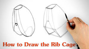how to draw the rib cage human anatomy for artists