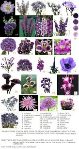 Colors Of Purple Best 25 Purple Flower Names Ideas On Pinterest Purple Names