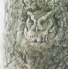 country canada robert bateman screech owl in apple tree