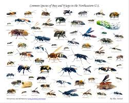 best 25 different types of bees ideas on pinterest types of