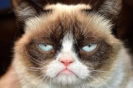 Grumpy Cat No Meme - grumpy cat s christmas best christmas movie ever the z beads blog